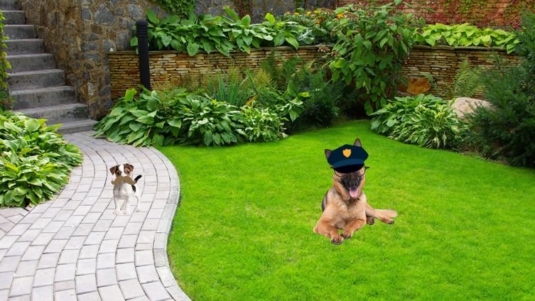 Police doggo and doggo in training! I was bored! 😂
